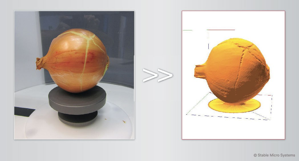 Onion sample ready for scanning >> Archived scan of sample