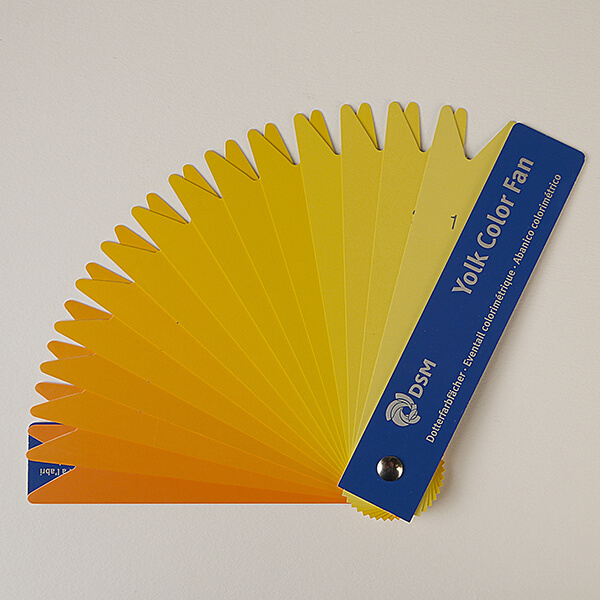Yolk Colour Fan